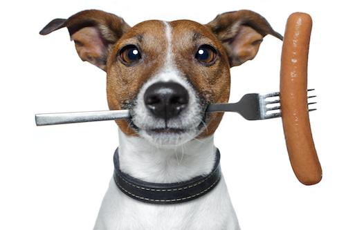 Dog with Hot Dog
