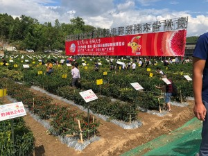 Part of the 5-acre chilli field in Xiazi Town. There were 1,000 different varieties growing in it. The large red banner is an ad for the Capsicum Expo.