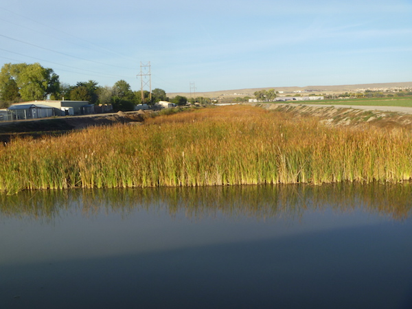 This flood basin attracts ducks, geese, and redwing blackbirds.