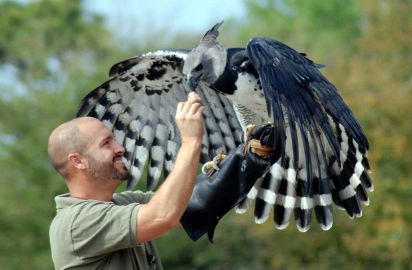 Harpy with falconer