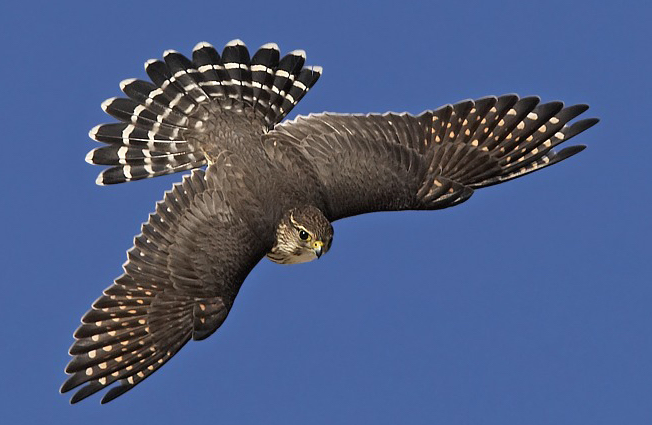 1000  images about falconry on Pinterest