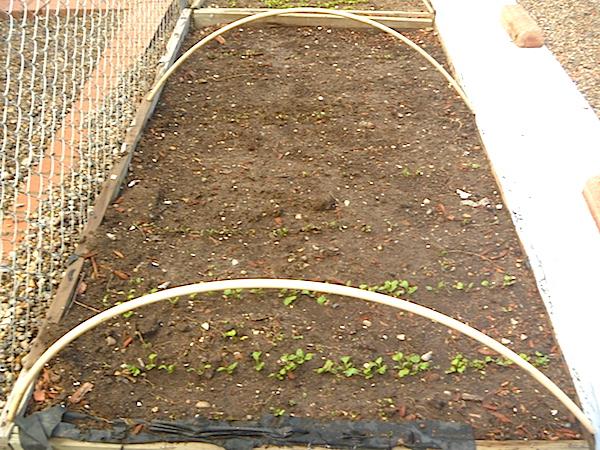 Mini Greenhouse open