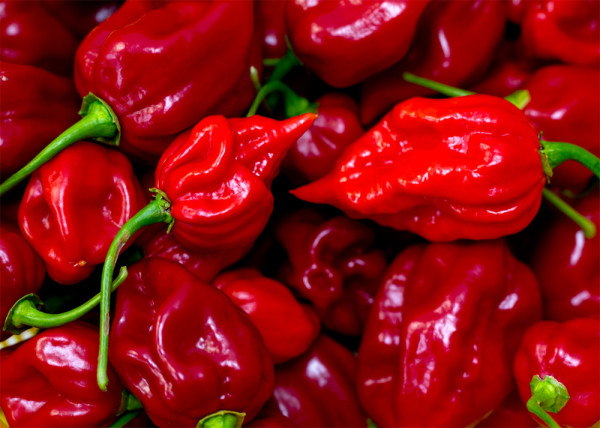Scorpion Superhot Chiles