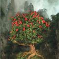 bonchi chile plant