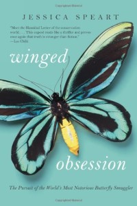 Winged Obession