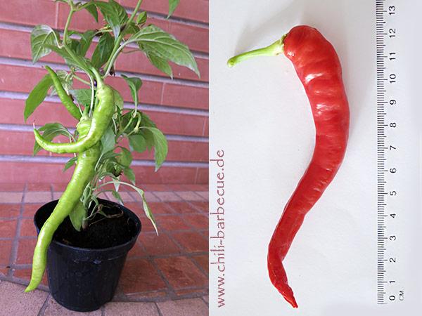 aceto plant redpod