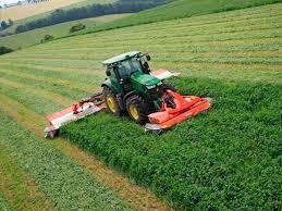 alfalfa mowing