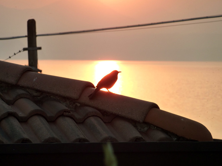 Blacky the Blackbird at Sunset by the Lake