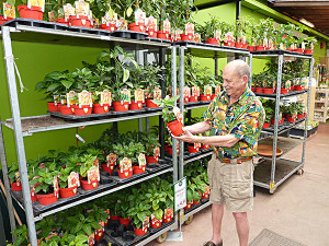 Superhot Chile Plants at the Nursery