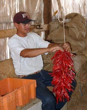 Tying a Ristra