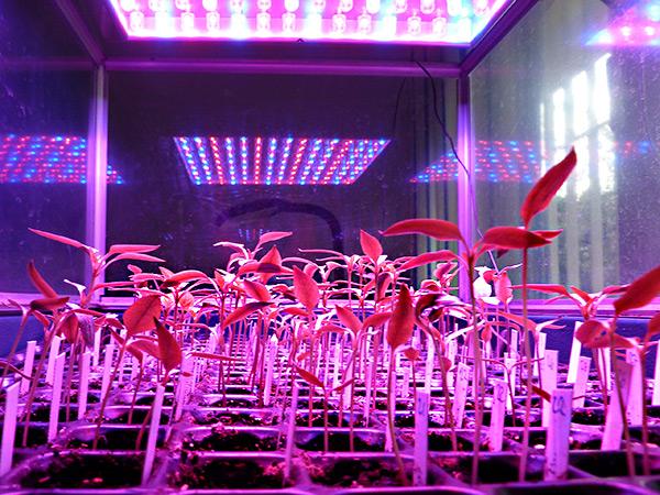LED growbox