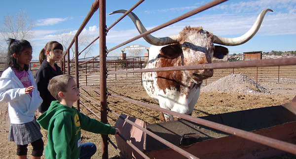 kids with longhorn