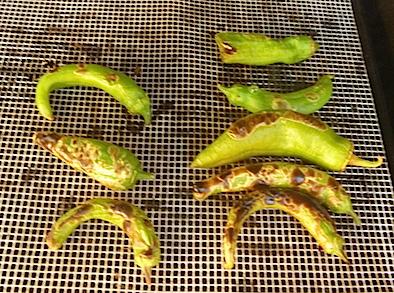 roasting green chiles